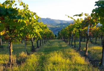 Cantine Aperte in Vendemmia 2018 in Lombardia