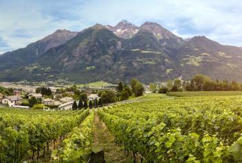 Cantine Aperte 2018 in Valle d'Aosta