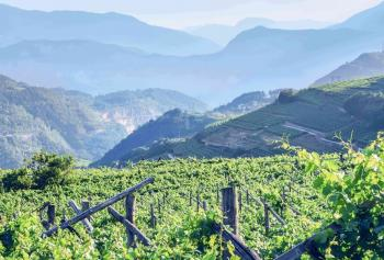 "Trentino ""Wine Region of the Year 2020"" secondo Wine Enthusiast"