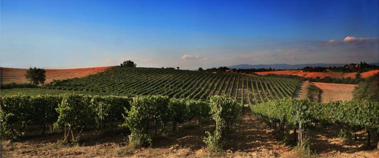 Weekend per cantine in Toscana